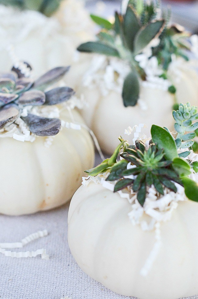 These adorable mini pumpkin succulents belong in any farmhouse style room