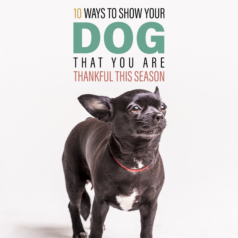 Come on in and check out 10 Ways to Show Your Dog You Are Thankful This Season. You will find really fun ways to show them how much you Love them!!!
