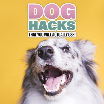 Dog Hacks That You Will Actually Use