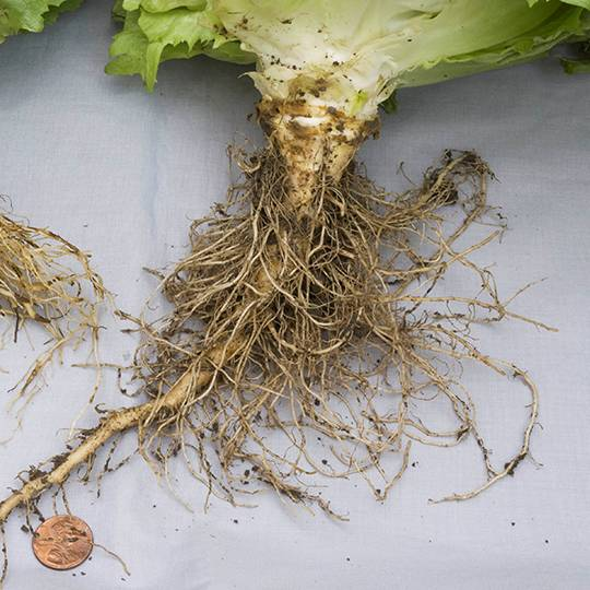 These are the Reasons Your Houseplants Are Dying. You are going to find solutions for all kinds of plant problems from root rot to fungus and many more!