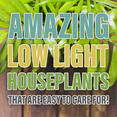 Amazing Low Light Houseplants That are Easy to Care For!