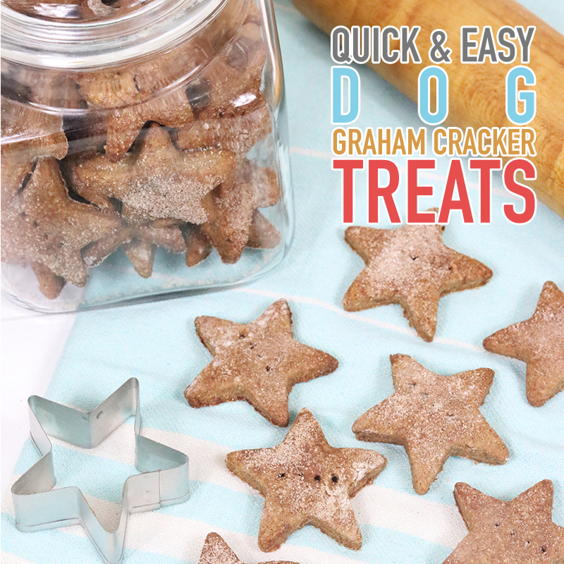 When your Doggie is craving a treat... why not pop some Quick and Easy Dog Graham Cracker Treats into the oven!  Wagging Tails and Wet Doggie Kisses is your reward!