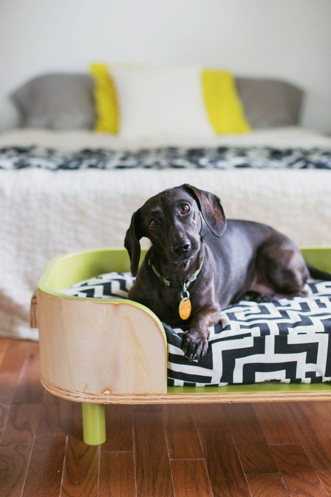 10 Pet Friendly Interior Tips For Your Home The Cottage Market
