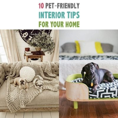 10 Pet-Friendly Interior Tips for Your Home