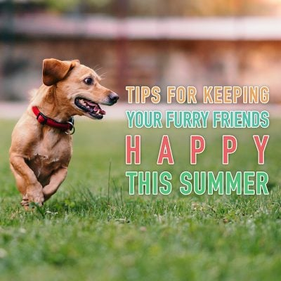 Tips for Keeping Your Furry Friends Happy This Summer