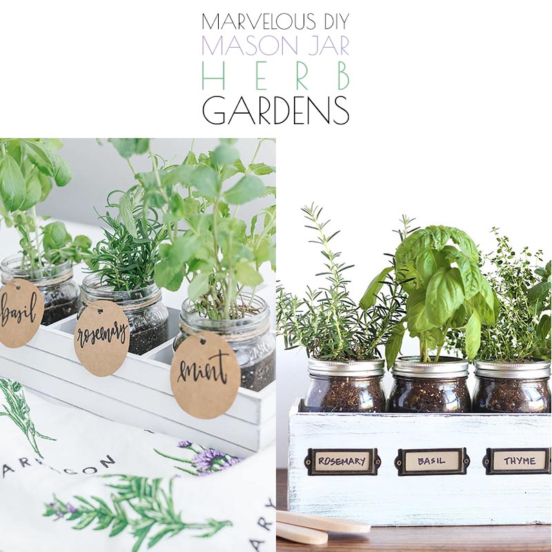 These Marvelous DIY Mason Jar Herb Gardens are quick and easy to create and look amazing. The rewards of making one is a burst of fresh aromatic flavor to all of your yummy dishes.