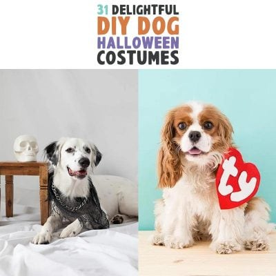 31 Delightful DIY Dog Halloween Costumes