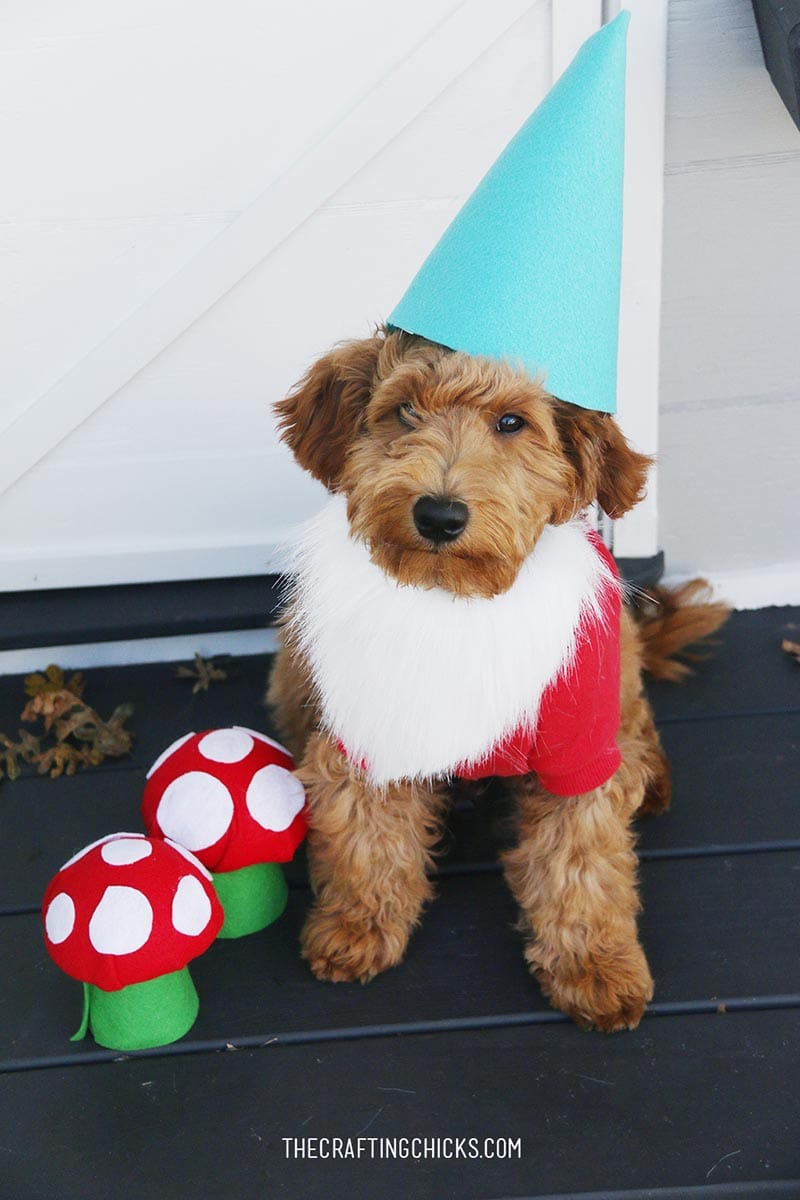 You are going to love this Collection of 31 Delightful DIY Dog Halloween Costumes that will have your doggie trick or treating in style!