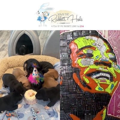 Down the Rabbit Hole Where Fun Links & Pet Rescues Meet!
