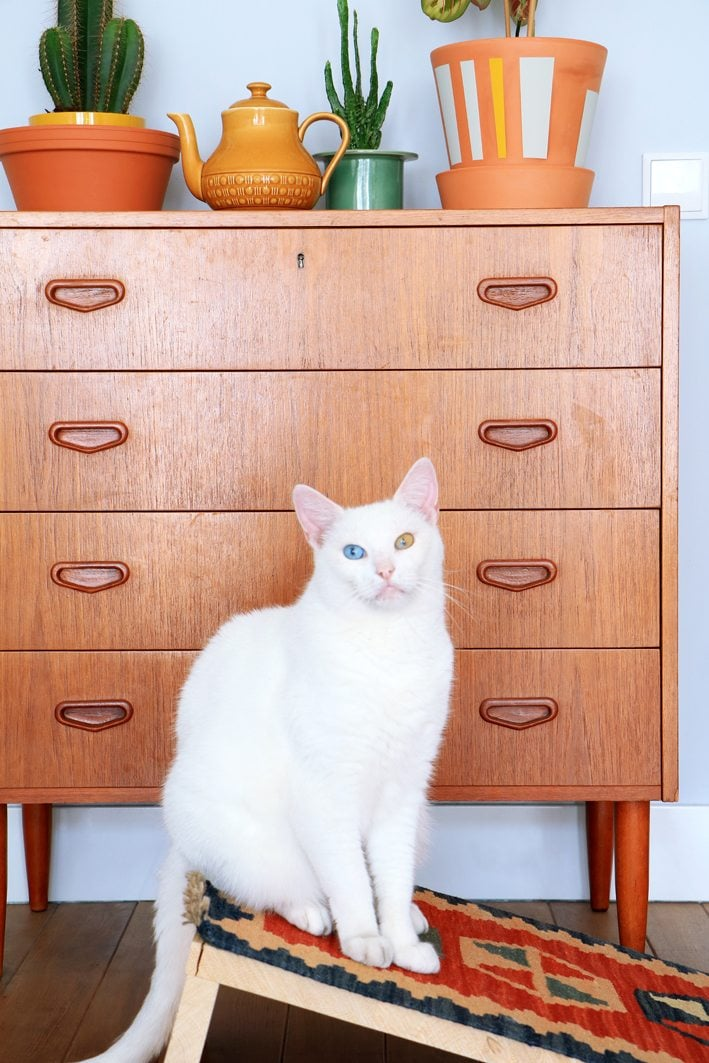 This Ultimate Collection of IKEA Hacks For Pets is going to open a world of comfort and style to your precious pets for sure!