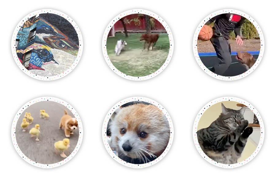 Por la madriguera del conejo donde se encuentran los enlaces divertidos y los rescates de mascotas.  ¡Un gran lugar para disfrutar de enlaces interesantes y también ayudar a Pet Rescues en todo el mundo!