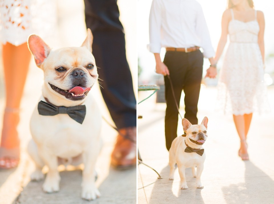 adorable engagement session with dog
