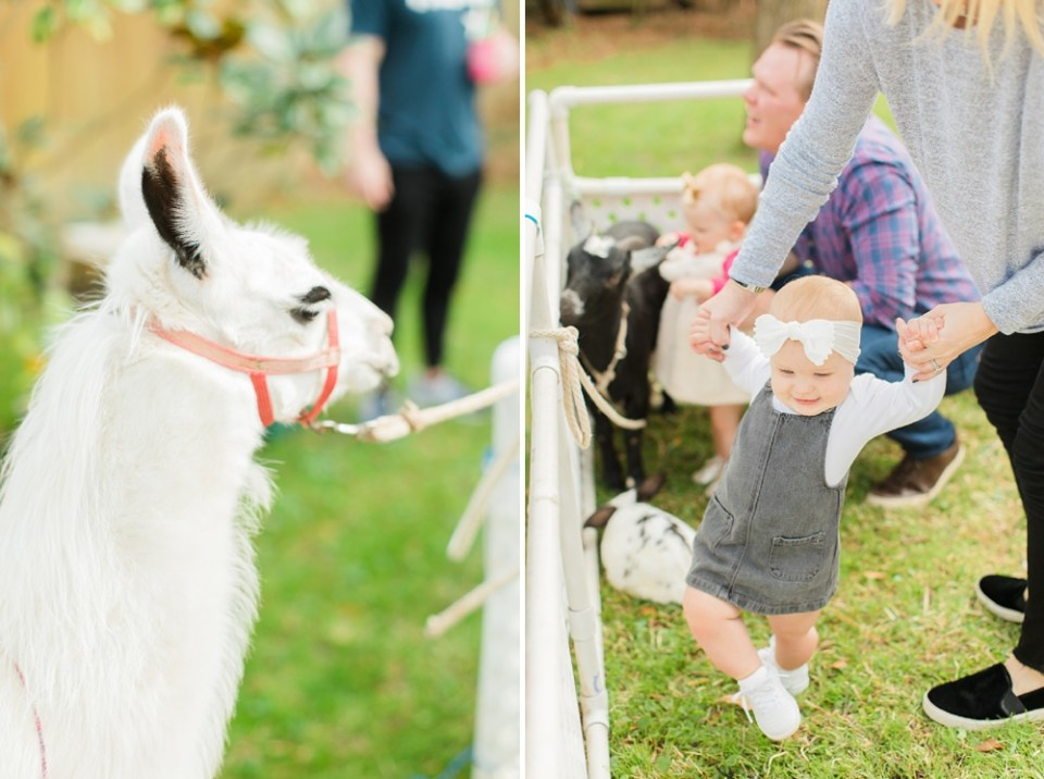Llama First Birthday Houston