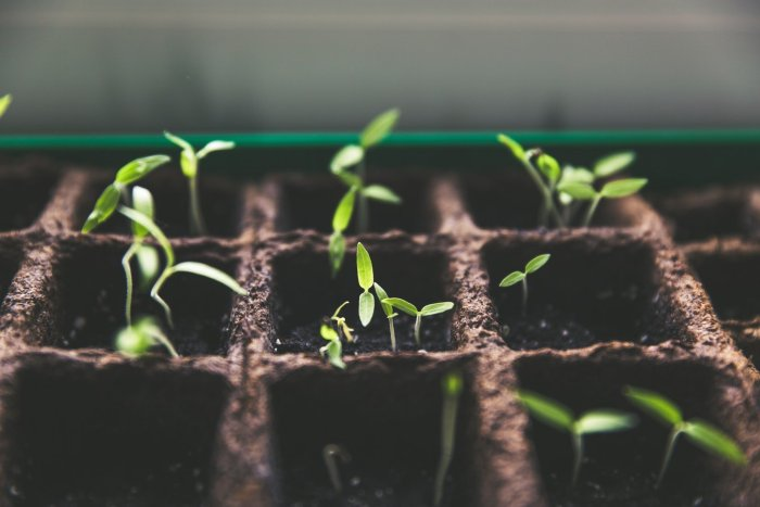 Seed Starting