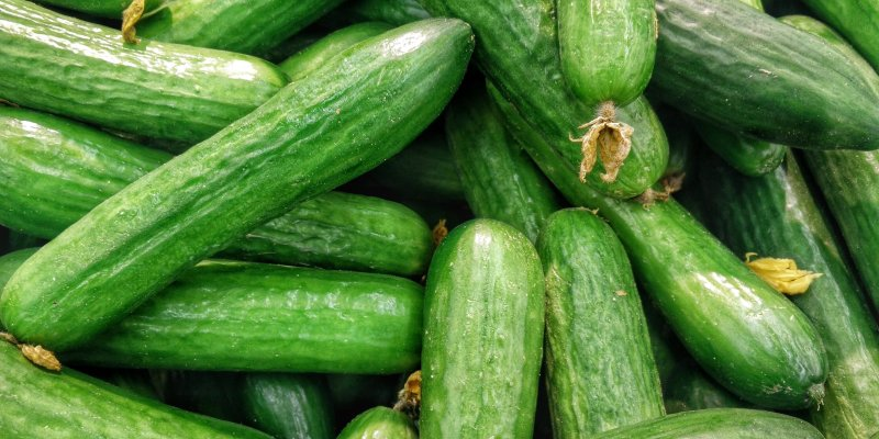 Cucumber Fruit Or Vegetable