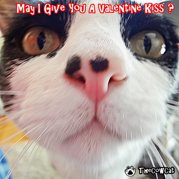 Its Valentines Day The Cow Cat Valentines ECards