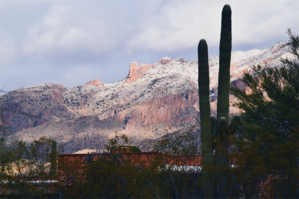 My New Year's Resolutions + Winter in Tucson!