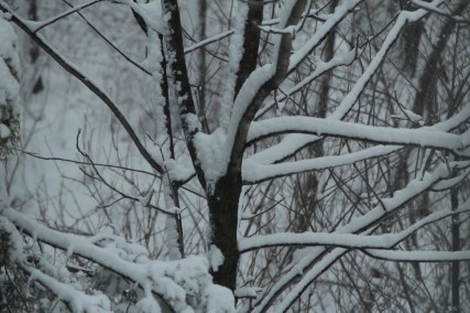 AssortedPhotosMayBlizzard, & Tree (Part 7) 086