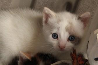 New Kittens! 023
