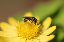 Macro, Flowers, Sky, Insects 037 - Copy