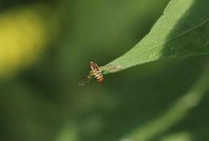 Macro, many insects 030