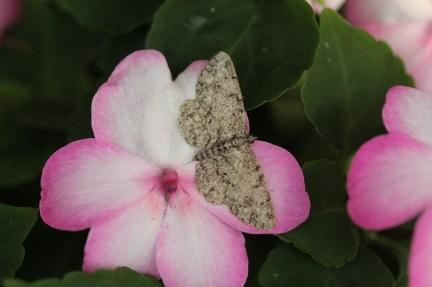 Macro, many insects 097