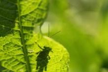 Macro, many insects 126