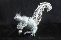 Squirrel CR 7