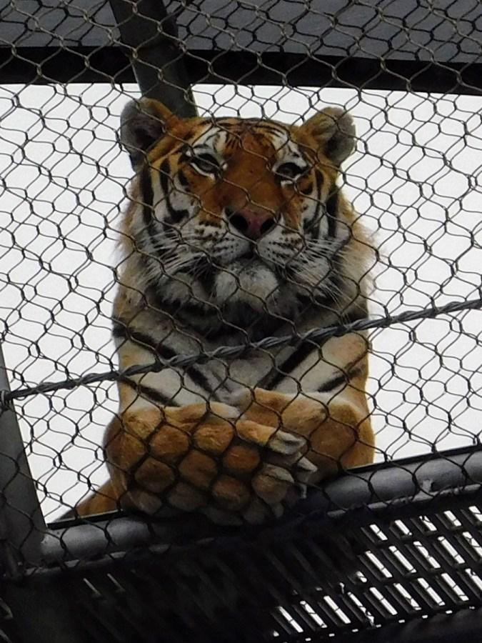 philadelphia-zoo-summer-ale-festival_20180623-182245 (2)