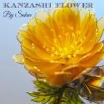 Kanzashi Flowers by Sakae