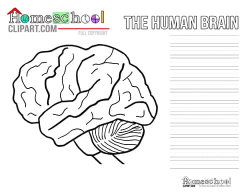 picture regarding Brain Hat Printable called Head Crafts Routines - The Cunning Clroom