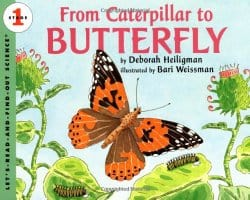 ButterflyScience