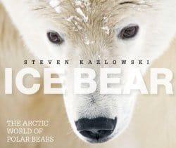 ArcticBear