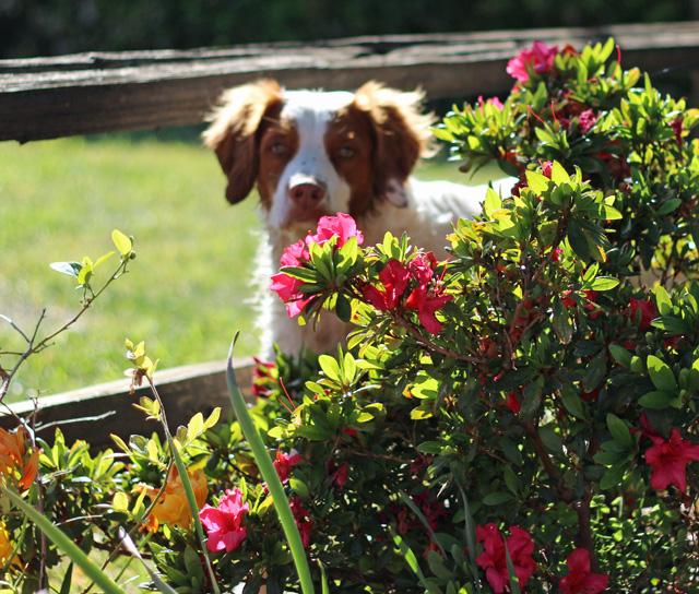 cooper in flowers
