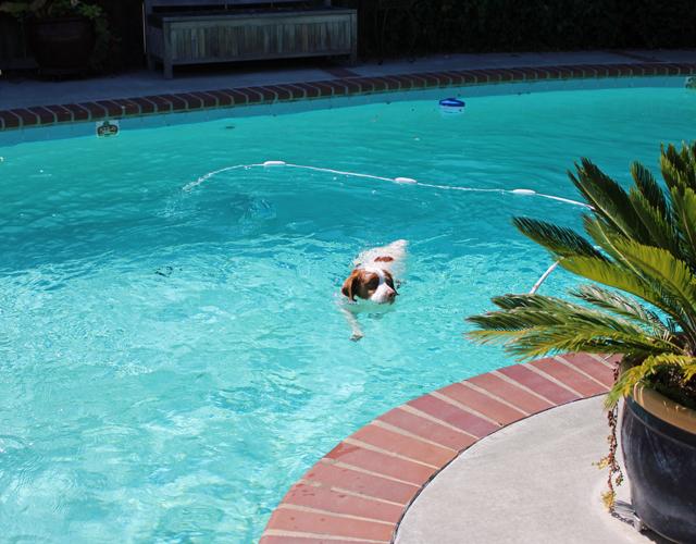 cooper swim