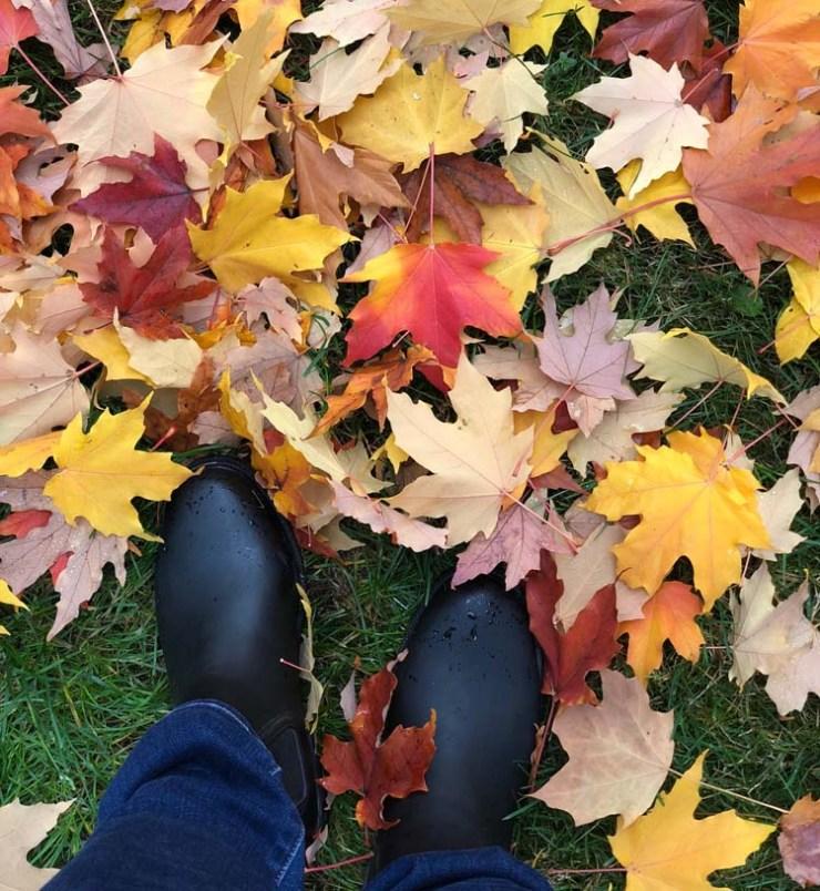 Fall leaves in Washington.