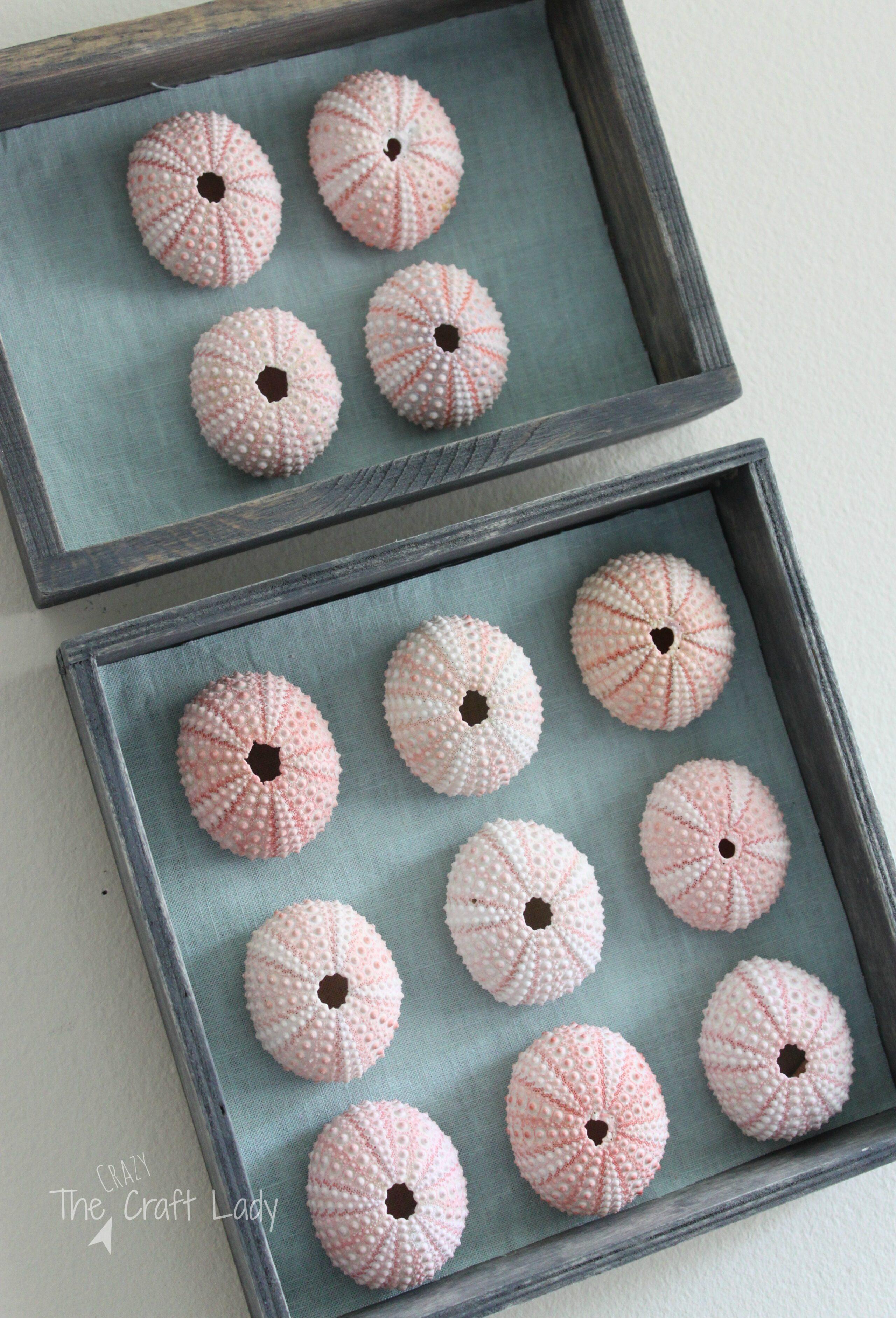 DIY Sea Urchin Specimen Art