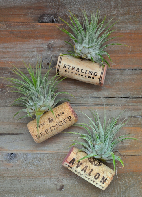 Air Plant Wine Cork Magnet - Pretty AND Functional Wine Cork Crafts