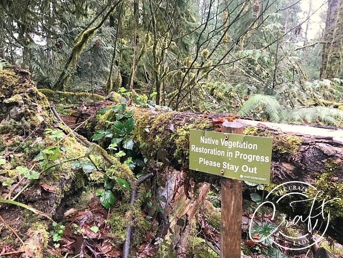 Native Vegitation Restoration at Snoqualmie Falls