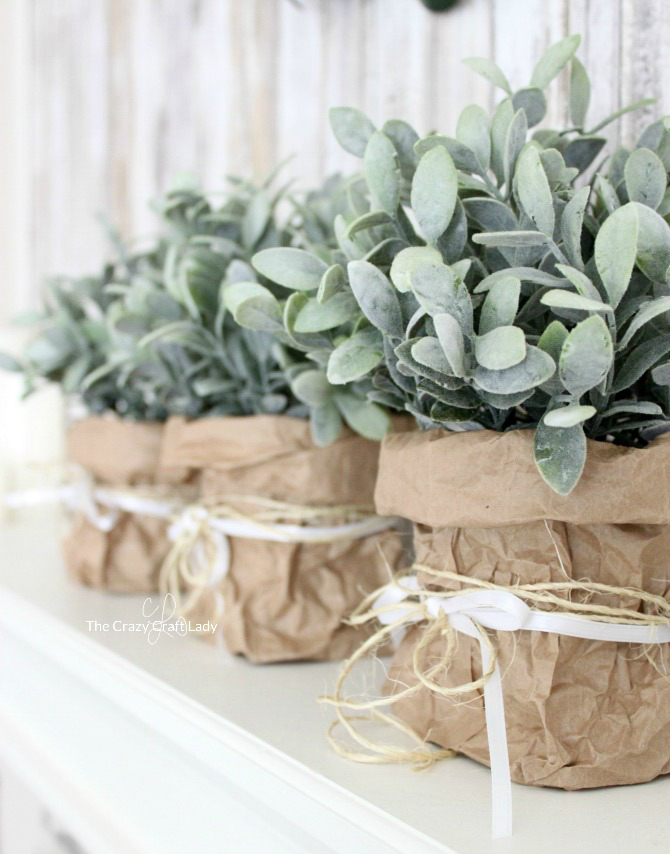 Indoor plants in crumpled paper bag vases.