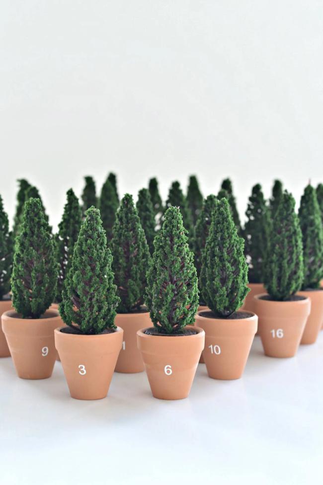 Christmas Advent Calendar With Mini Planted Trees