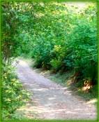 path 1 framed