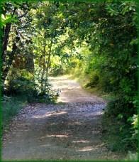path 21 framed