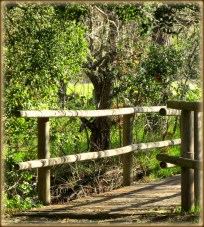 path14 framed