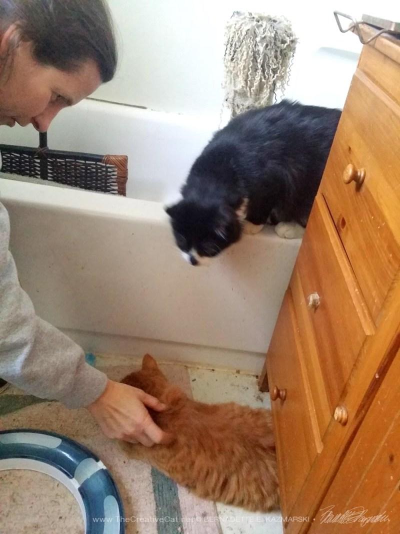 orange cat under cabinet