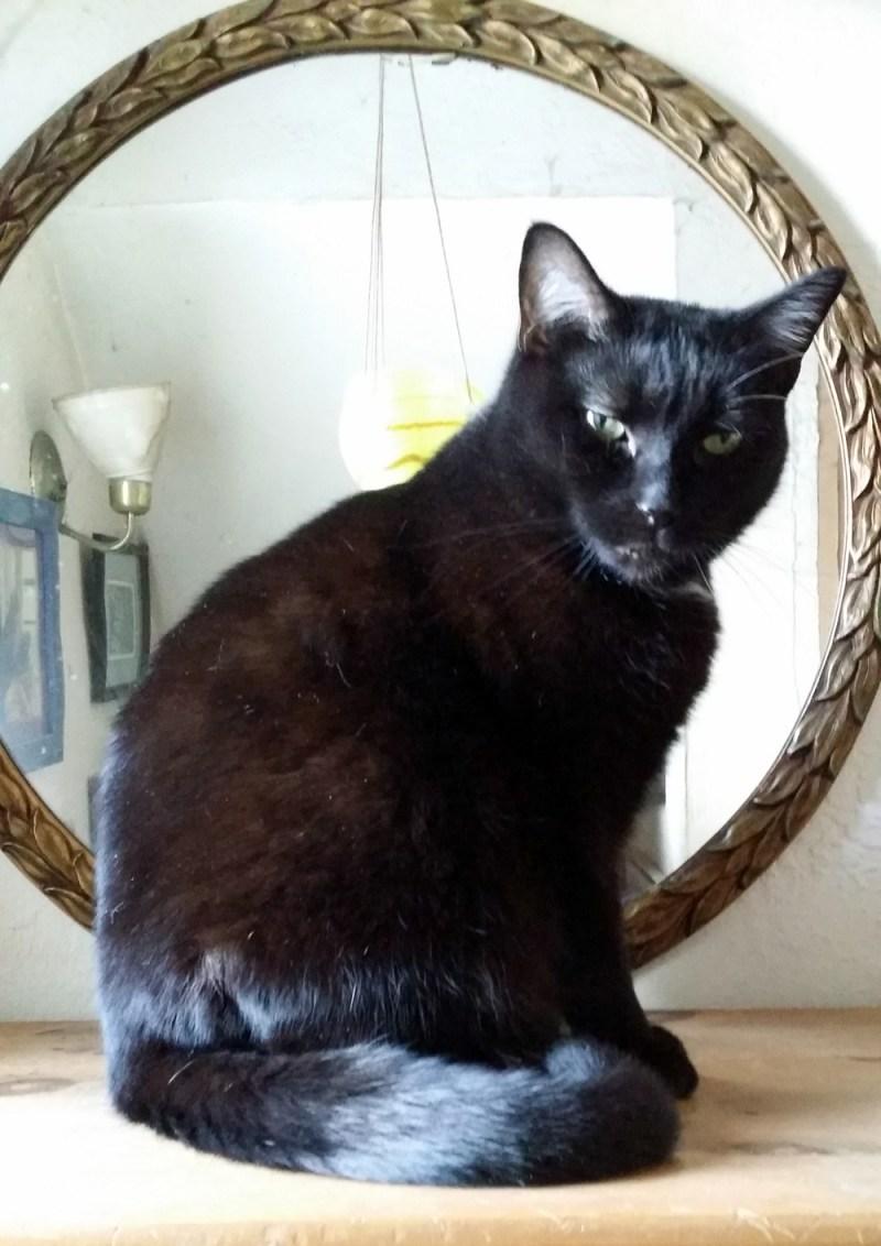 black cat in front of mirror
