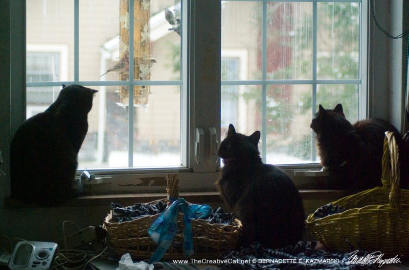 Bella, Basil and Hamlet enjoy some CatTV