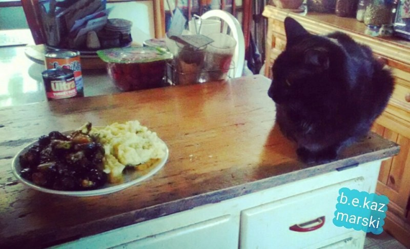 black cat and plate of food