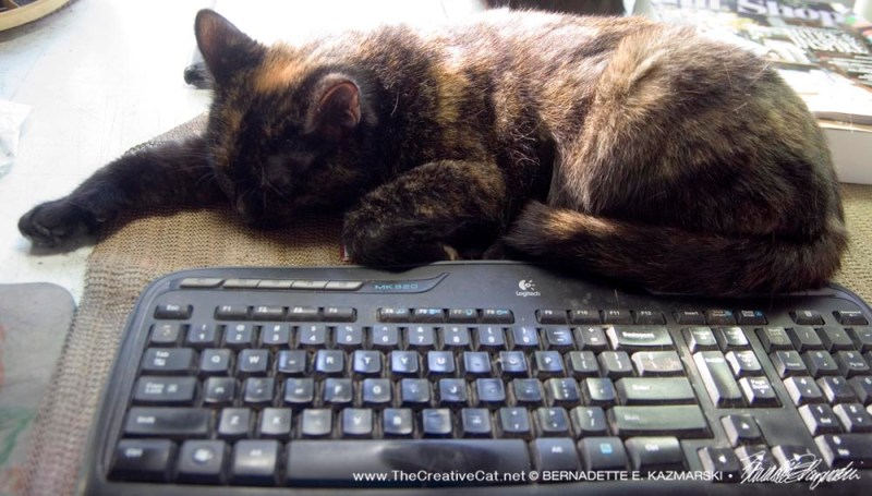 tortoiseshell cat at keyboard