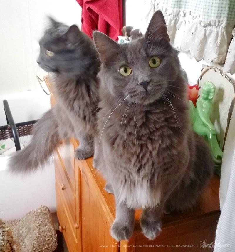 I found a kitty who looks like me! gray kittens